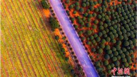 春色满园 航拍华人娱乐app下载新余现代农业基地如童话世界