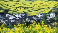 新余市大力推进农村人居环境整治工作