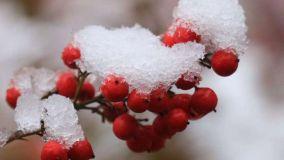 铜钹山的一场雪,飘进了唐诗宋词