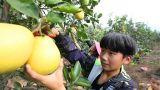 莲花县大力发展生态农业