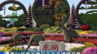 南昌:第31届菊花展11月18日在花博园开幕