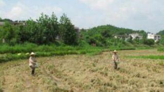 江西省7000余农户三年获赔1047万元