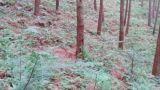 贵溪市双圳林场被国家林草局列为国家储备林联盟会员单位