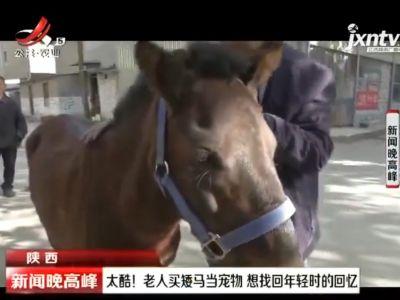 陕西:太酷!老人买矮马当宠物 想找回年轻时的回忆