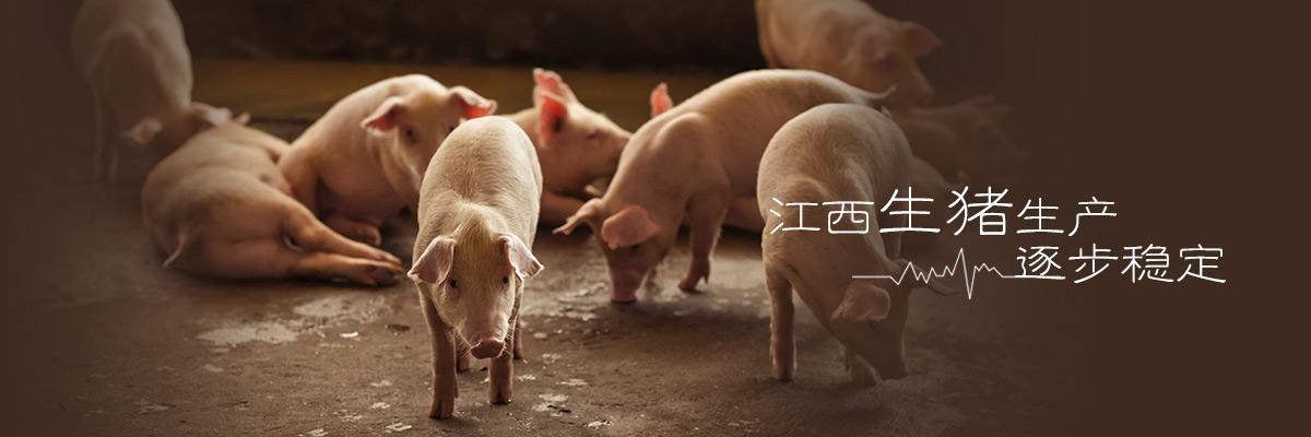 华人娱乐app下载生猪生产逐步稳定