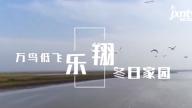 """""""飞向鄱阳湖 白鹤回家路""""12月1日大型融媒体直播 讲述白鹤回家动人故事"""