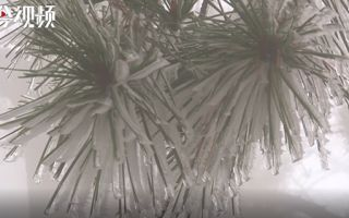 真美!廬山齊現雨凇霧凇景觀
