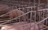 新干建设生猪生态循环养殖小区