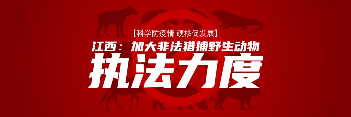 【科學防疫情 硬核促發展】江西:加大非法獵捕野生動物執法力度