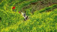 婺源篁岭花海健身步道上线 助力婺源油菜花旅游文化节