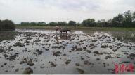 贵溪市罗河镇屈碧村大力推动早稻种植工作
