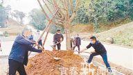 铜鼓:安置点植树增春色 贫困户迁居喜心头