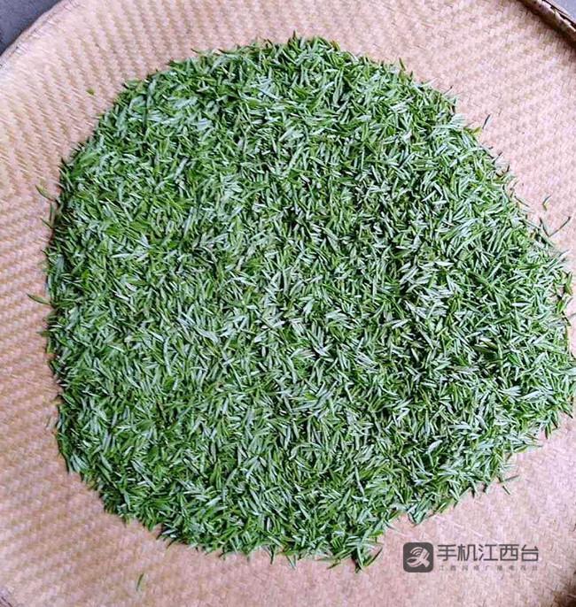 茶农采摘的茶叶鲜叶