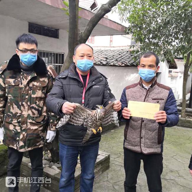 区林业局对太平镇泮溪村民救助凤头鹰进行现金奖励。