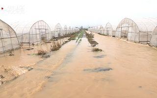 高安遭暴雨侵襲 瓜農150萬打水漂