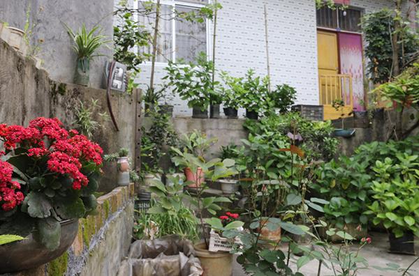 村民李卫国的美丽庭院