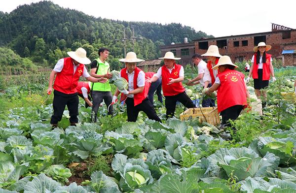 采摘蔬菜3