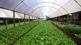 新余市农业农村局深入蔬菜生产企业督导蔬菜大棚保险工作