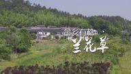 """短视频丨畲乡有株""""兰花草"""""""