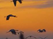 鄱阳湖保护区监测到鸟类123种