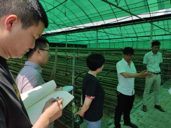 县委办调研考察香菇大棚基地