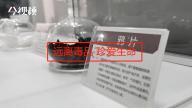 南昌东湖区禁毒志愿者协会成立