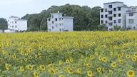 赤山镇大院村:厚植农业产业 为乡村振兴奠定坚实基础