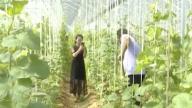 罗坊镇:生态富民产业兴 绿色发展后劲足