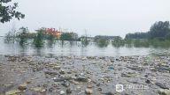 7月初,受强降雨影响,长江水位上涨,从上游漂来许多树枝杂木及生活垃圾,堆积在长江的江西九江沿江干堤段。