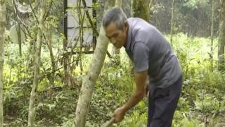 上饶:林业科技扶贫 给贫困户提能增收