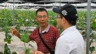 跟着职业菜农学种菜!赣州每年培训5万名新菜农