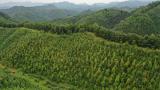赣州市信丰县金盆山林场应用无人机技术助力资源保护培育