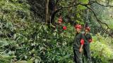 赣州市信丰县金鸡林场加强珍稀植物管护巡查