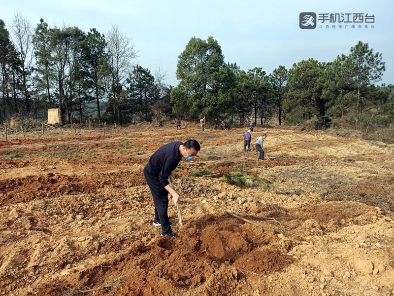 吕常红与村民一起挖土种黄桃