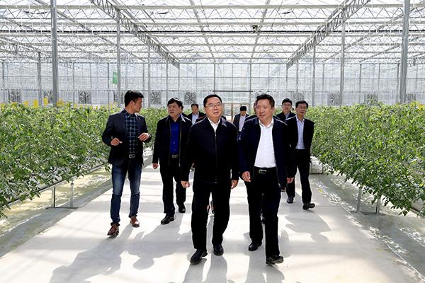 6 现代农业示范园二期项目