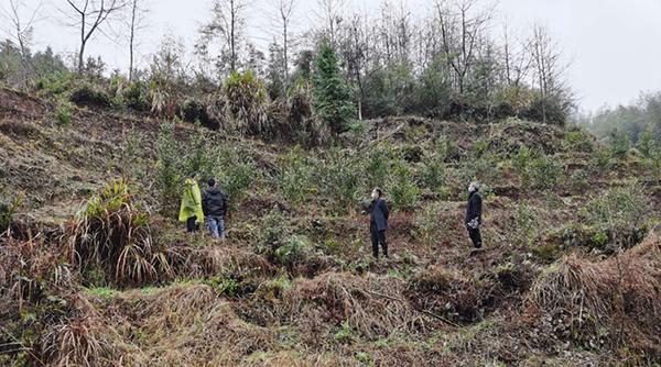 邀请市林业局油茶种植专家现场讲解剪枝、排水等问题