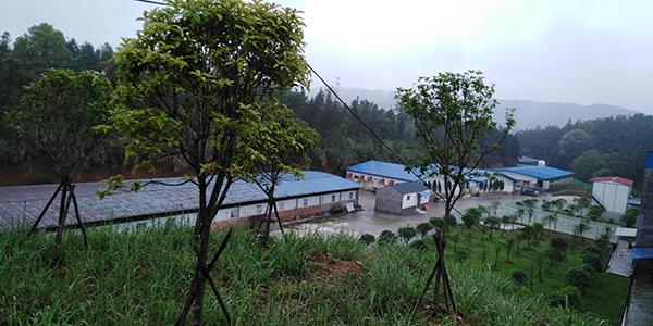 生猪养殖基地