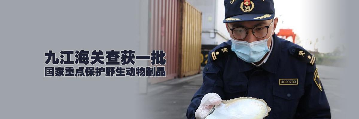 11.1噸貝殼被查 原來是國家重點保護野生動物制品