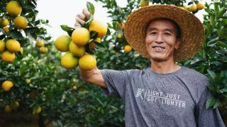 脱贫致富加速度,阿里脱贫生态助力寻乌卖空1万吨脐橙