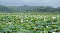 江西宜春:大河有水小河满