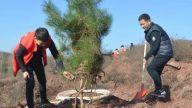 景德镇市积极开展冬季造林工作