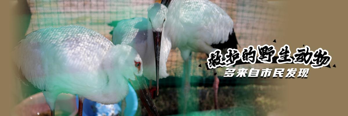 江西:救护的野生动物 多来自市民发现