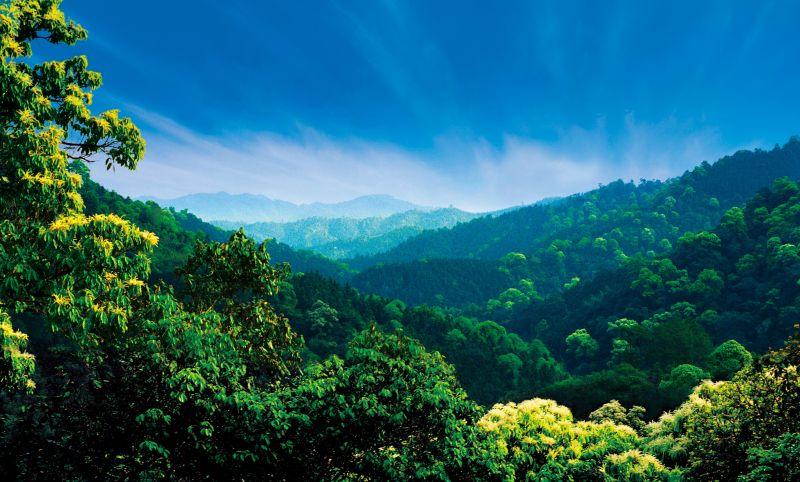 4.江西天然阔叶林。