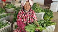 萍乡腊市:发挥特色产业优势 大力发展特色农业
