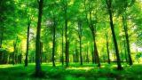 萍乡上栗县桐木镇政协联络组组织政协委员参加植树造林活动