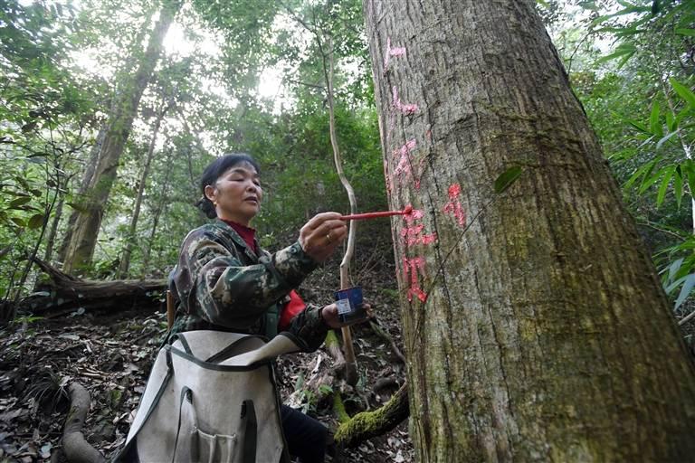 用红笔写下爱护森林的宣传标语。