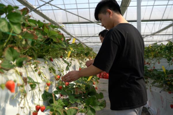 2.调研组在溪霞生态草莓种植基地实地调研
