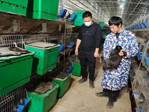 3村民欧阳晃平返乡发展黑兔养殖产业