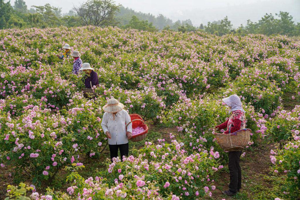半亩花田创始人亓云吉:我眼中的半亩花田