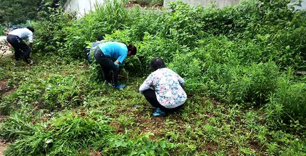 建档立卡户在村头除草